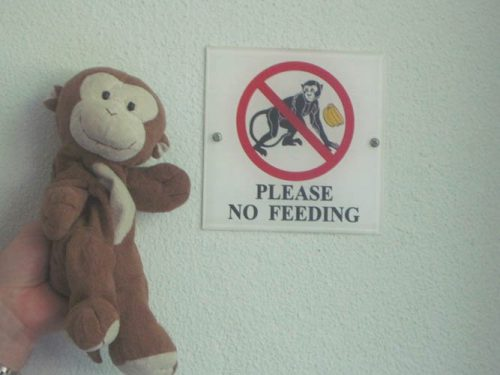 Please don't feed the monkeys in Langkawi, Malaysia