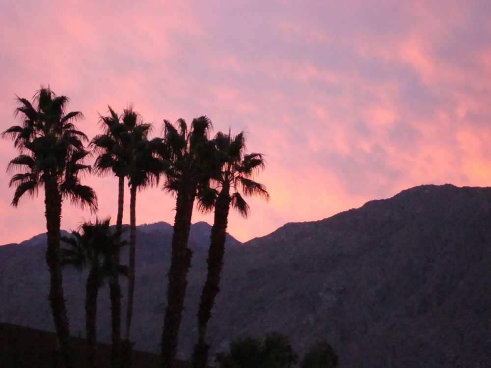 Palm Springs for kids – ten things for your family to do!