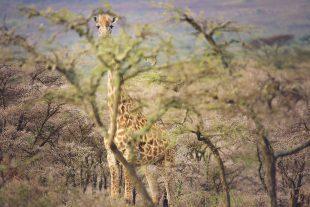 family-friendly-safari