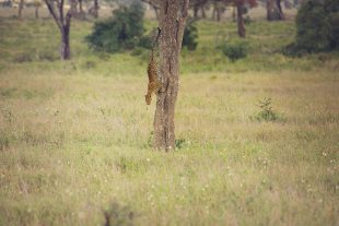 serengeti-safari-camp-with-family
