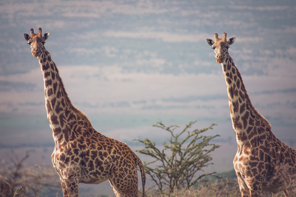 safari-packing-list-for-tanzania